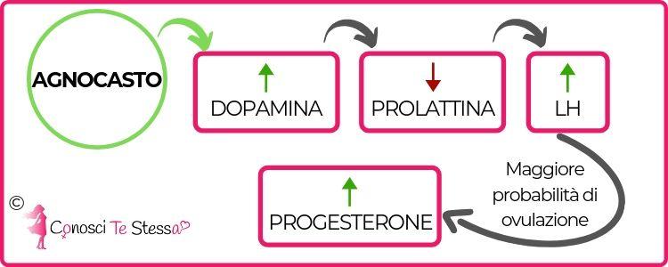 Osserva come l'Agnocasto agisce alzando i valori della dopamina e quindi aumentando la probabilità di ovulazione e la fertilità nella donna